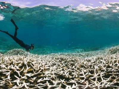 Climate Grief image of dead coral